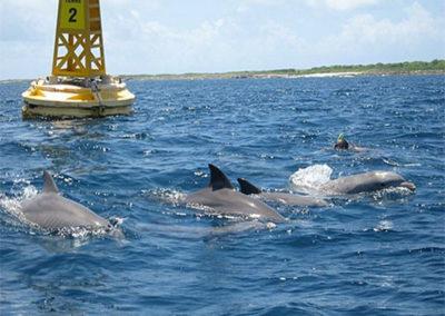 dauphins petite terre